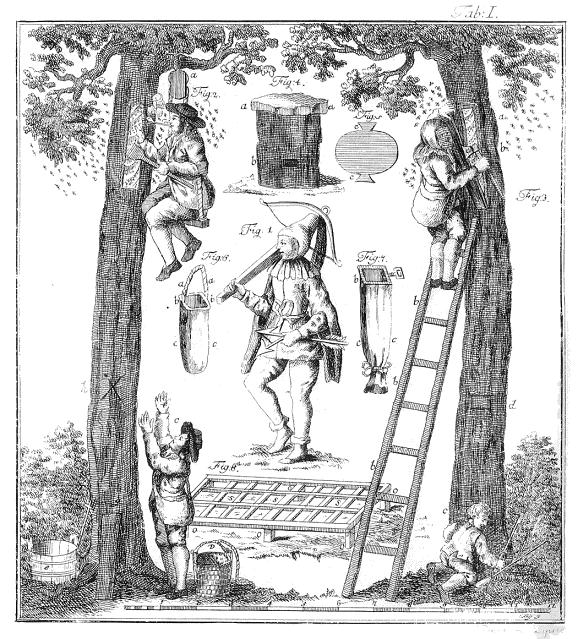 Waldzeidlerei (Foto: Wikipedia)